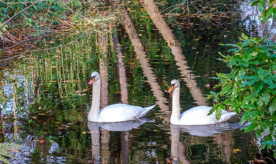 'Wandelen met…' langs vijvers van Hilverbeek